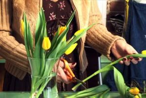 preparing cut flowers