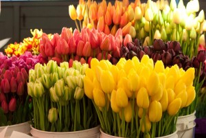 wholesale flowers 2